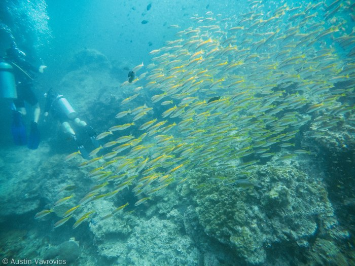 Small school of fish passing by.